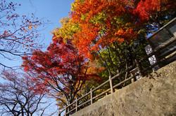 Tochigi20122_17_2