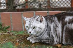 Karuizawacat1026