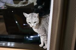 Karuizawacat1033
