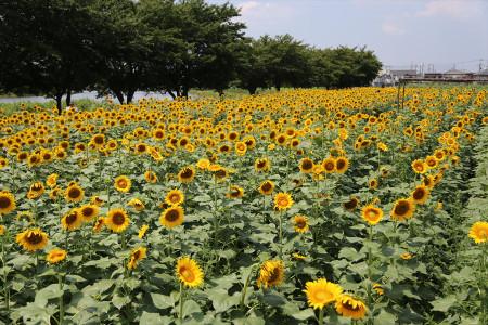 Himawari20131003