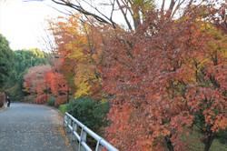 Kitanomaru20131047