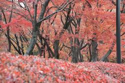 Kitanomaru20131061