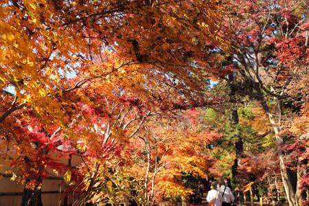Heirinji_20141036