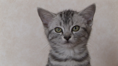 cat_01-1