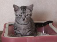cat_01-4