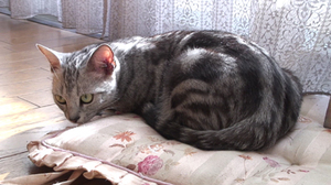 Cat_052