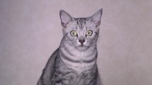 Cat_053