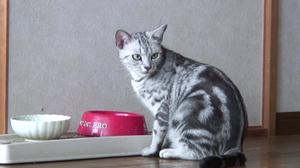 Cat_054